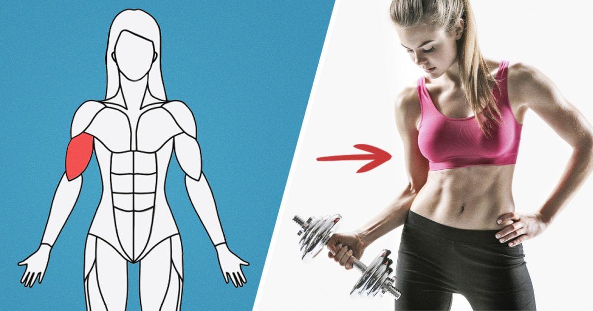 Site traz exercícios específicos para cada grupo muscular