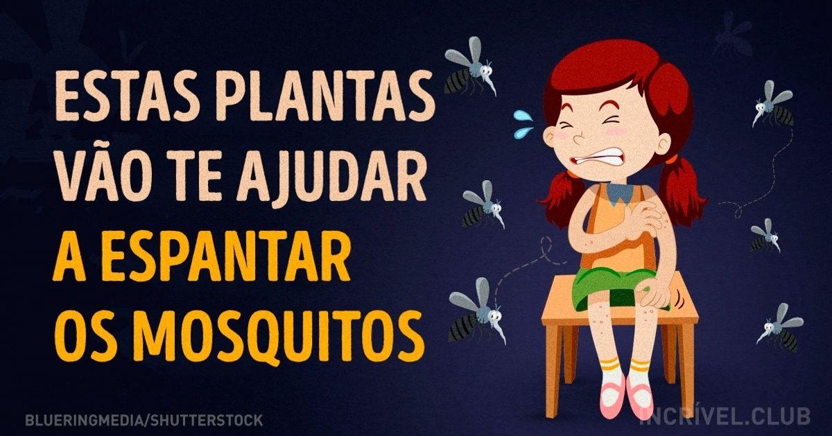 Algumas plantas que vãteajudar aespantar osmosquitos