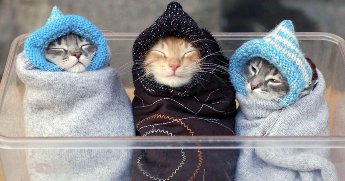 15Fotos para aquecer noinverno ounum dia chuvoso