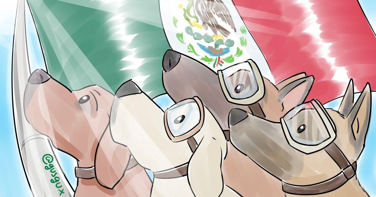 Oscães que estão salvando vítimas doterremoto noMéxico