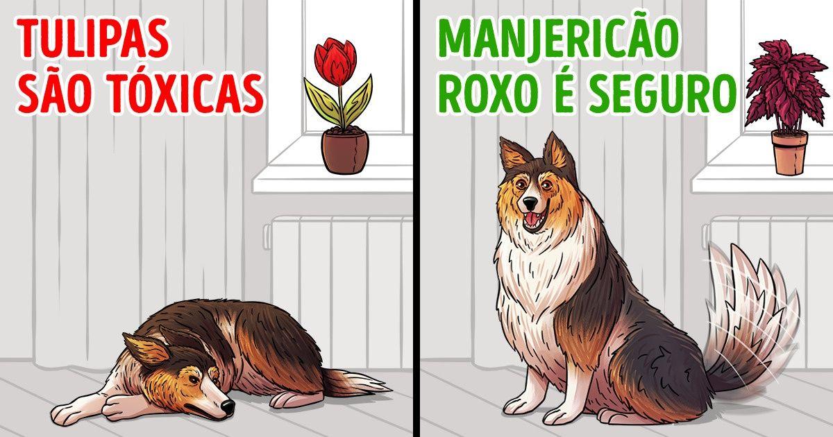 15 Plantas para evitar ter em casa se você tem animais de estimação