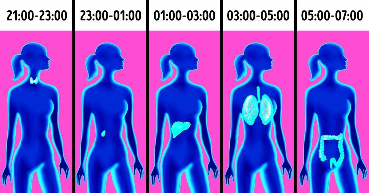 Por que você está acordando namesma hora todas asnoites? Amedicina chinesa explica