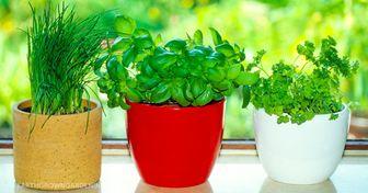 8ervas aromáticas que são fáceis deplantar emcasa