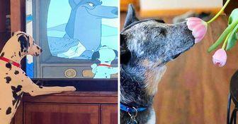 20+ Fotos divertidas de cachorros que foram flagrados em situações mais humanas que caninas