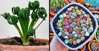 18 Plantas tão incríveis que podem dar uma nova cara para sua casa