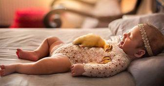 Fotógrafo clica recém-nascidos em momentos meigos com animais, e imagens são muito fofas
