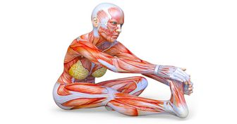 10 Exercícios de alongamento para conseguir uma super flexibilidade em um mês