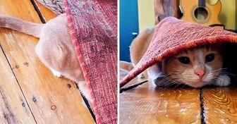 20 Pets que estão convencidos de que conseguiram se esconder bem