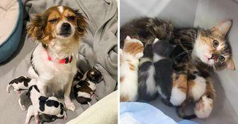 16 Pets que tentam ser bons pais, mas às vezes falham na tentativa