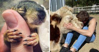 15+ Fotos de animais prontos para dar um amor que todos nós precisamos hoje em dia
