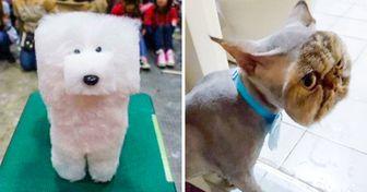 21 Tosas de animais de estimação que não deram muito certo