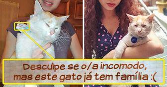 """Outro gato """"infiel"""". Uma jovem descobriu que seu gato tem dois lares e nos contou os detalhes da história"""