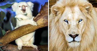15 Animais albinos que nasceram para deixar o mundo maravilhado