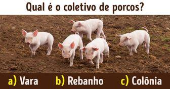 Teste: Coloque seu conhecimento à prova e responda qual o coletivo destes 13 animais