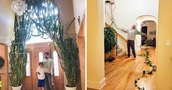 20+ Pessoas que têm mão boa para plantas e não tiveram dúvida em compartilhar o resultado de seus dons