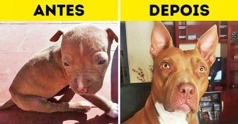 19 Seguidores do Incrível revelam o antes e o depois de pets que foram resgatados e adotados