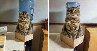 Como é a vida com um gato em casa (20+ fotos)