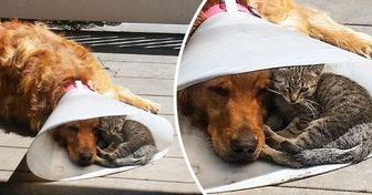 """20 Pets que tiveram um dia difícil usando o """"cone da vergonha"""""""