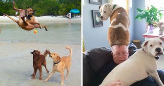 20 Cães cujos genes de loucura são o melhor antidepressivo para os seus donos