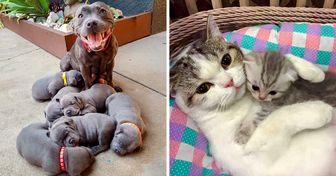 20 Famílias de animais que farão você querer abraçar seus pais imediatamente
