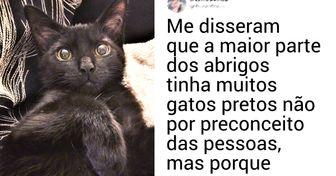 20 Provas de que ter um gato preto como bicho de estimação pode ser mais especial do que pensamos