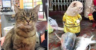 20+ Gatos que se sentem mais à vontade em lojas do que seus próprios donos