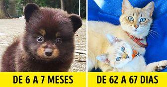15 Animais e suas gestações, que podem durar de 29 dias a 4 anos