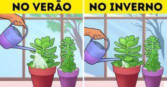 16 Dicas eficazes compartilhadas por leitores do Incrível para o cuidado de plantas em casa