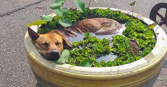 15+ Animais que chegaram ao nível mais avançado de relaxamento