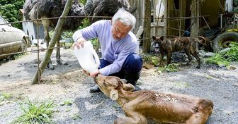 O que acontece em Fukushima 8 anos depois do acidente nuclear (spoiler: japoneses corajosos vivem lá para salvar os animais)