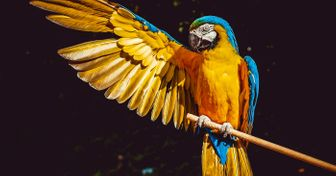 Índia proíbe o encarceramento de pássaros em gaiolas e vamos explicar tudo sobre essa inédita decisão