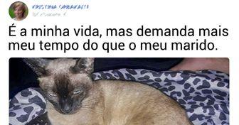 15 Internautas comentam como os seus gatos são exigentes