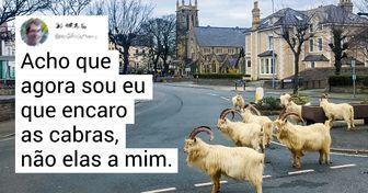 """Algumas cabras """"tomaram"""" as ruas de uma cidade galesa, deixando seus habitantes boquiabertos"""