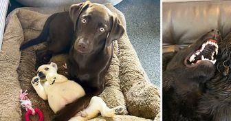 20+ Cães que não estavam preparados para conhecer os novos integrantes de suas famílias