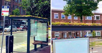 Cidade holandesa planta flores sobre 320 pontos de ônibus para ajudar a salvar as abelhas