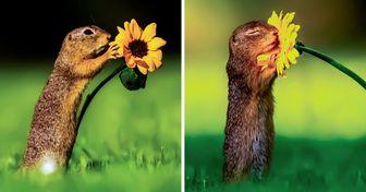18 Fotos de animais que mostram suas vidas de um ângulo muito diferente