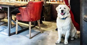 10 Cidades que valorizam os cachorros como eles merecem