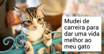 20+ Relatos de internautas que aprenderam algo interessante com seus gatos