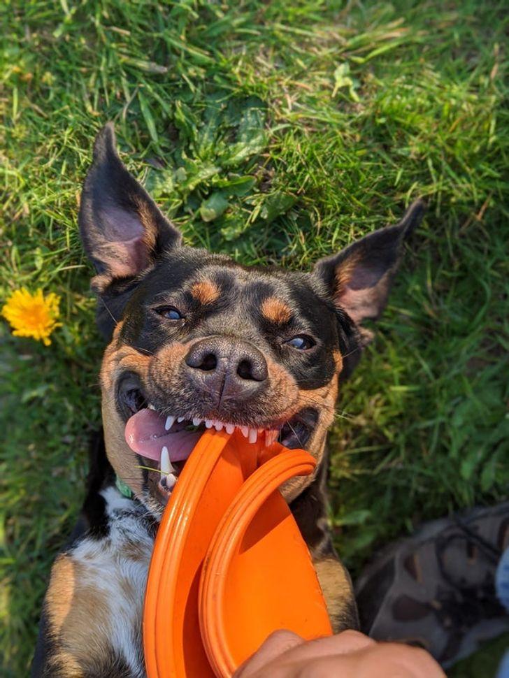 25 Pets em momentos constrangedores que vão fazer você chorar de rir