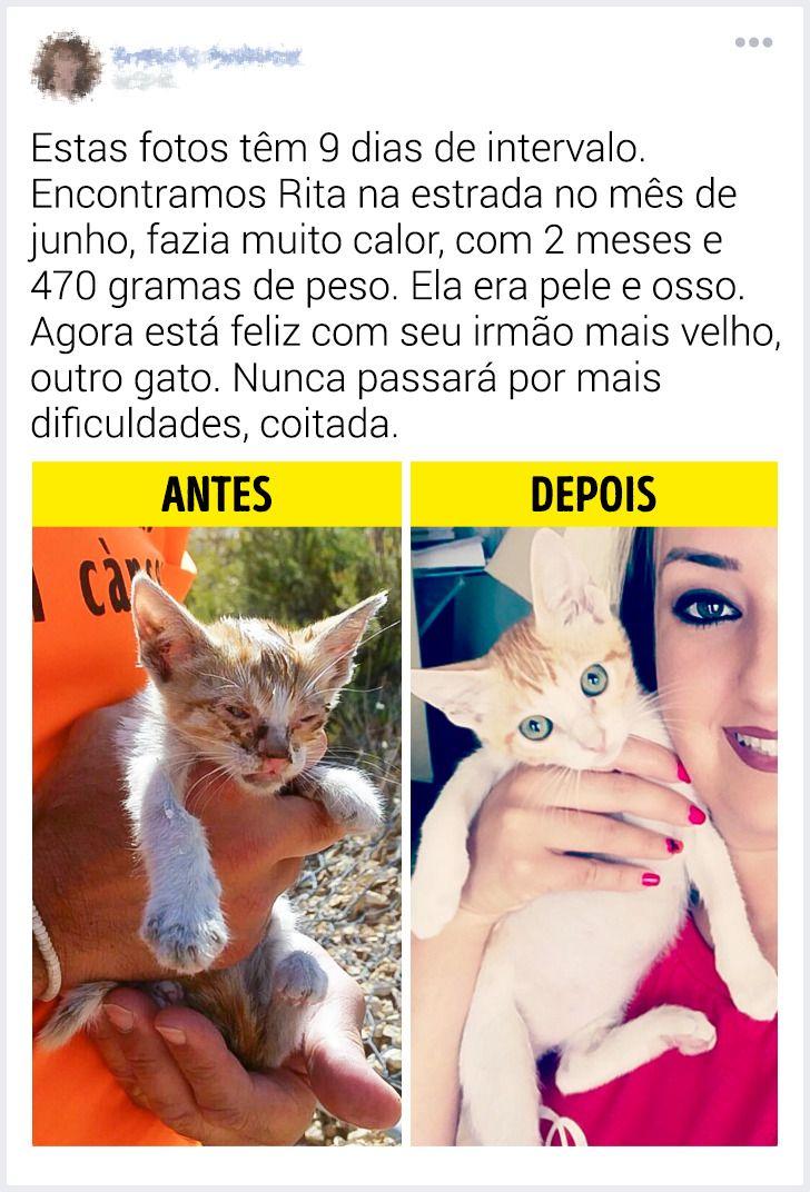 """15 Leitores do Incrível mostraram o """"antes"""" e o """"depois"""" dos animais de estimação que foram resgatados"""