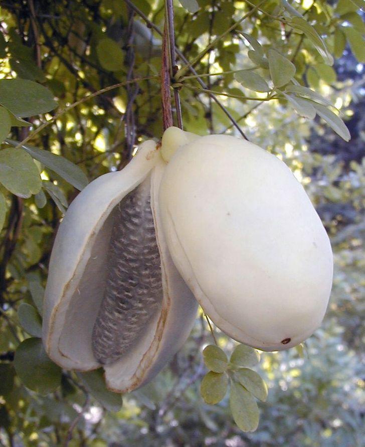 15 Frutas que não parecem feitas pela mãe natureza