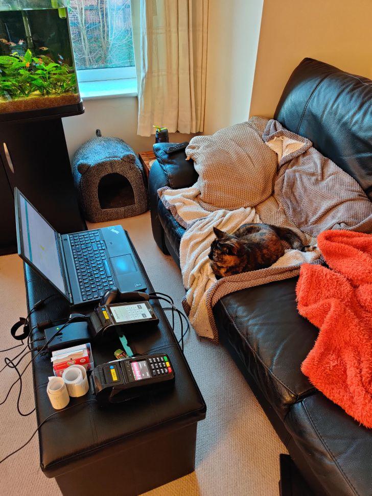 17 Internautas mostram como é a realidade de trabalhar em casa na companhia de animais de estimação
