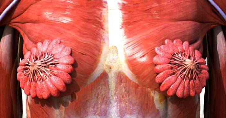 9 Curiosidades sobre as maravilhas do corpo feminino