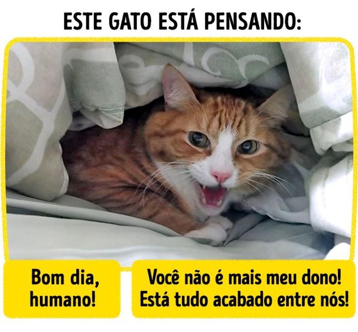 idioma felino gratuito