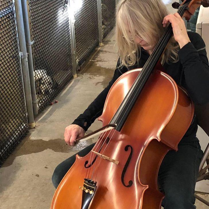 Violoncelista faz concertos em abrigos para cães e o efeito gerado é muito positivo