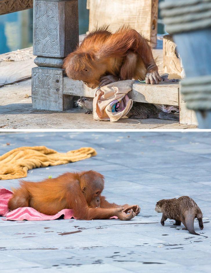 17 Fotos de animais com uma história impressionante por trás