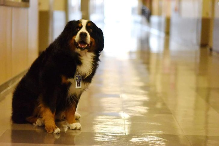 20+ Cães que merecem um prêmio pelos incríveis trabalhos que fazem