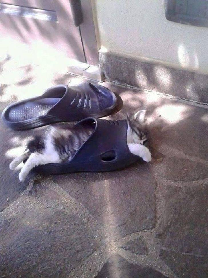 17 Gatos flexíveis que decidiram provar que podem tudo