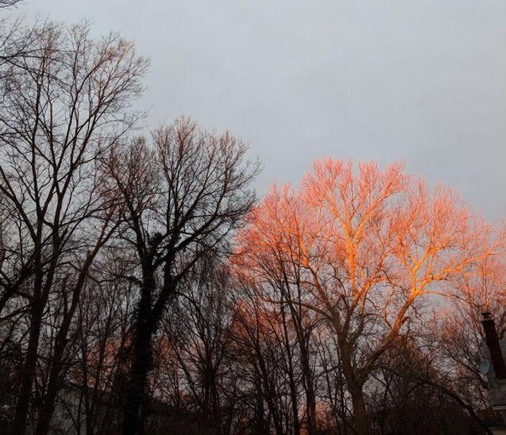 20+Fotos que mostram otalento danatureza para misturar cores