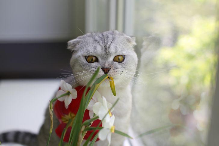 10 Erros cometidos por donos de gatos que podem gerar consequências graves para os animais